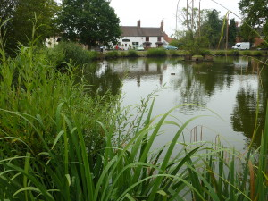hanley swan village pond
